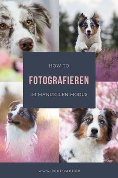 How to: Fotografieren im manuellen Modus   EquiCani Hundeblog Hundefotografie Tierfotografie Fototipps