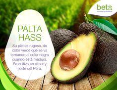 La palta hass se cultiva en el sur y el norte del Perú. ¡Beta, creciendo juntos!