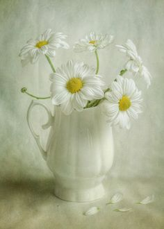White Mums - Mandy Disher