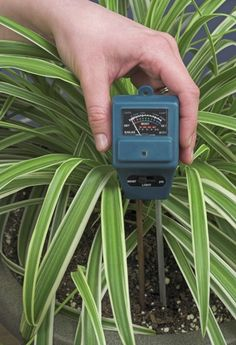 Testing Moisture In Plants: How To Gauge Soil Moisture In Plants