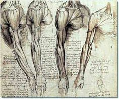 Kind of mind-blowing how Leonardo Da Vinci created these intensely accurate anatomical drawings that are still used in medical training today, himself having never practised medicine. Moral of the story? Art is important.