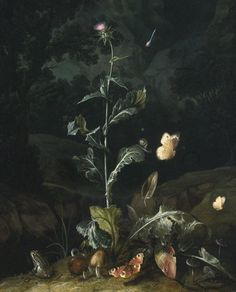 Nocturnal Forest Floor Still Life with a Thistle, Butterflies, Mushrooms and a Frog, 1671, Otto Marseus van Schriek, called Snuffelaer