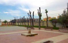 Ecologistas en Acción de Alcalá denuncia talas en el arbolado urbano