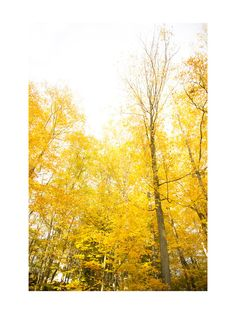 Autumn in New York by R studio for Minted  18x24  165 framed  [Partition 4 of 5]