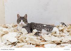 Wenn Die Katze Allein Zuhause Bleiben Muss