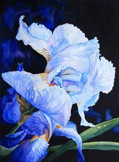 Blue Summer Iris by Hanne Lore Koehler ~ watercolor floral