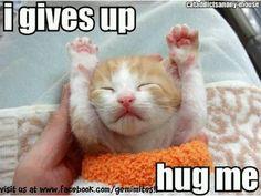 Funny kitten cat cats