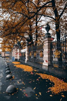 Image discovered by Bella Luisé. Find images and videos about beautiful, photography and nature on We Heart It - the app to get lost … Autumn Day, Autumn Leaves, Beautiful Places, Beautiful Pictures, Autumn Photography, Photography Studios, Autumn Aesthetic Photography, Photography Ideas, Photography Classes