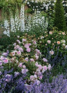 english garden Mixed Borders - Rosa Olivia Rose Austin / bred by David Austin: Back Gardens, Small Gardens, Herbaceous Perennials, Hardy Perennials, Garden Cottage, English Cottage Gardens, English Cottages, Colorful Garden, Purple Garden