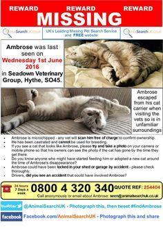 "Animal Search UK on Twitter: ""PLZ RT @Medivet_UK @CCVets1 #missingcat #hythe #southampton #SO45 #findambrose https://t.co/BgAdC9r89x … https://t.co/4RB6U9ZEbl"""