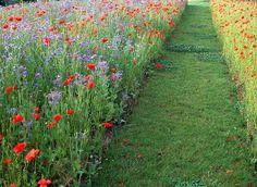 7 gestes pour avoir une belle pelouse