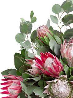Protea Art, Flor Protea, Protea Flower, Cactus Flower, Flower Art, Beautiful Flowers Garden, All Flowers, Exotic Flowers, Purple Flowers