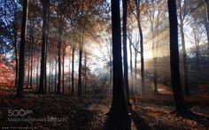 http://ift.tt/1ZY8ZTJ #Nature breathtaking #Photos Light explosion by bartceuppens http://ift.tt/1RXpQ4x