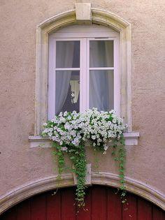 what a great window & windowbox.