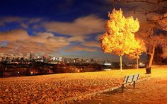 View of New York City from the park HD wallpaper City Wallpaper, Autumn Trees, New York City, Vineyard, Park, World, Outdoor, Bench, Fall Trees