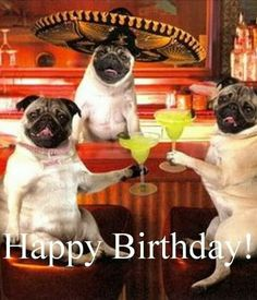 The Best Happy Birthday Memes - Happy Birthday Funny - Funny Birthday meme - - Happy Birthday! for more funny bday quotes and birthday wishes 2016 visit- quoteswishes.in The post The Best Happy Birthday Memes appeared first on Gag Dad. Happy Birthday Pug, Birthday Greetings For Men, Happy Birthday Wishes For Him, Happy Birthday Pictures, Birthday Wishes Quotes, Funny Birthday, Birthday Funnies, Birthday Ideas, Glitter Birthday