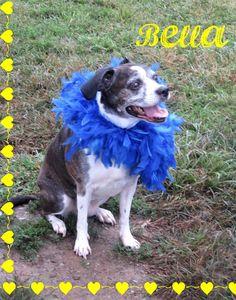 Boston Terrier dog for Adoption in Franklin, TN. ADN-664924 on PuppyFinder.com Gender: Female. Age: Senior
