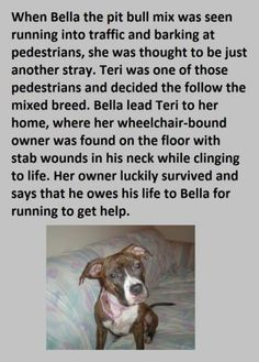 True stories of PT BULLS saving lives. These dogs are not nearly as horrendous as people say they are. At all.  Please share to spread the word!