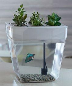Aqua Farm Self-Cleaning Fish Tank