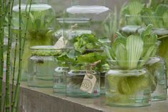 Waterplantjes in glazen potten