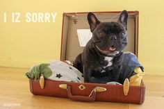 Pet Things That Devalue Your Home (By $30,000!)