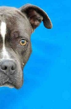 Abused, abandoned and now on death row, giving up hope