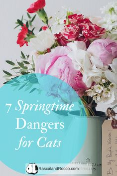 Springtime means exploring cats but can also mean danger. 7 Springtime Dangers to be aware of for your cats. Cat Owner Humor, Buy A Kitten, Cat Biting, Pet Parade, Mean Cat, Dog Ramp, Cat Jokes, Cat Care Tips, Cat Memorial