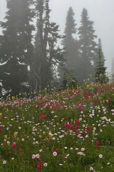Skyline Loop Trail, on MT Rainier...6.0 roundtrip. 1400 ft elevation gain. Wildflowers and Marmonts are for sure!