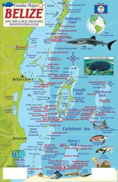 Belize Scuba Diving Map and Reef Creature Identification guide, Ambergris Caye, San Pedro, Caribbean and Central American Maps San Ignacio is a great place to look into Map Of Belize, Belize Diving, Belize City, Best Scuba Diving, Belize Travel, Scuba Travel, Cave Diving, Cozumel Snorkeling, Belize Flag