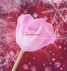 #christmas #design Choose from #greetingcards #homedecor #wallart  Great #giftideas