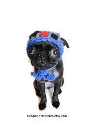 gorro para perros tejidas - Buscar con Google