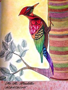 Coloured By Fe Rustia Padilla Millie Marottas Animal Kingdom