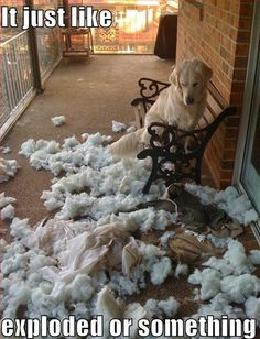 It just like exploded or something! The reason why we don't have a cushion on our furniture in the sunroom is because Bear did something like this.