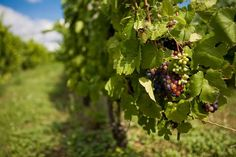 Explore Pure Michigan's Wineries this Season