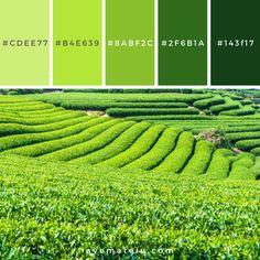 Pantone Colour Palettes, Purple Color Palettes, Pantone Color, Flat Color Palette, Colour Pallette, Palette Verte, Green Pallete, Color Balance, Color Inspiration