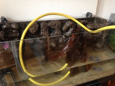 De bak vullen, eindelijk. Het stuk kienhout dreef al snel, daarom 24u onder water gehouden.