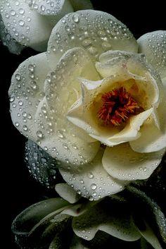 White & Wet | Flickr - Berbagi Foto!