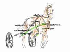 Valjakkovaljastus: video, ohjeet, valjaiden osat | mw hevospalvelut