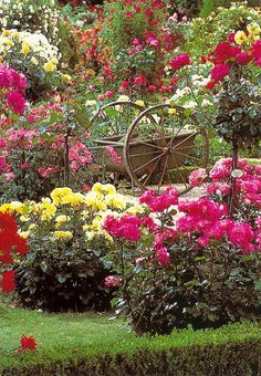 Wagon in the Rose Ga Flowers Garden Love