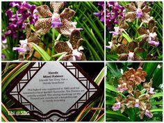 Heritage+Orchids1.jpg 640×480 pixels