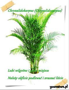 serwis randkowy Palm Bay