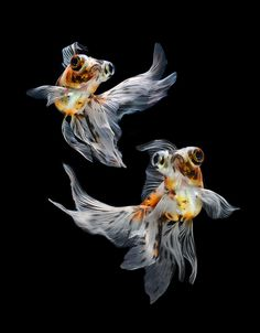 This is an amazing photograph. I love fishies! Photograph fish dance by visarute…