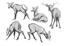 Drawing Animals Deer Character Design References 43+ Ideas #drawing