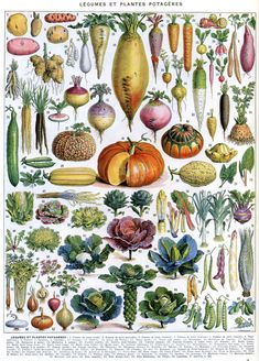 Vegetables and Vegetable Plants. Illustrated by Adolphe Millot Larousse in [1907-1910].