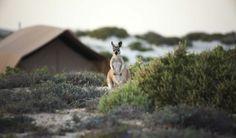 Sal Salis Ningaloo Reef. Luxury Lodges of Australia
