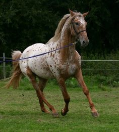 Absolutely loooove this horse's colour!!!