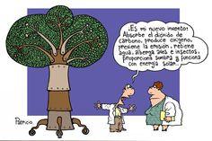 Increíble todo lo que este árbol es capaz de hacer, tendremos que inventarlos, ya no hay...
