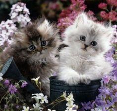 cute kittens in the watering can - Cats Wallpaper ID 1210278 - Desktop Nexus Animals