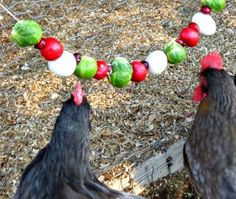 Just like any pet, chickens deserve occasional treats too. They may not be as affectionate as your dog but they certainly help a lot in the backyard. The treats are not just given to make them happy, they serve a purpose too. Treats help in keeping your chooks healthy all year round. In the winter, treats serve as a substitute source of nutrients for the plants they love to eat, which are hibernating and buried in snow. It keeps them preoccupied during winter, hydrated and cool in the…