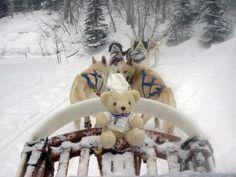 #BechamelBear went #snowsledding. Definitely having fun enjoying the #snow!